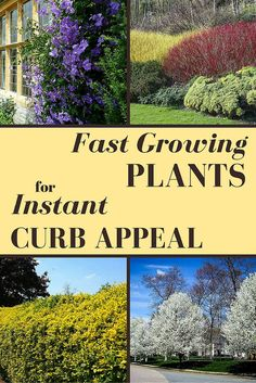 These fast growing plants and trees can help you amp up your curb appeal quickly. Install a few shrubs and some flowering vines, and your street view can seriously change for the better.