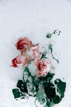 Image of Flotsam // w a t e r p l a n t s - Rose Pink