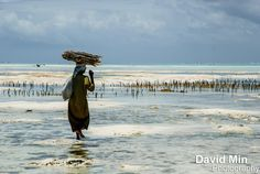 David Min photograph Jambiani, Zanzibar - Fisherwoman https://www.flickr.com/photos/david_min/8158731330