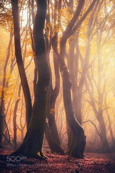 Dancing trees II by Jean-FrancoisChaubard