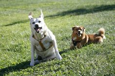 Daisy & friend