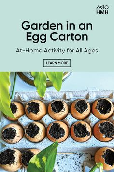 Have students complete this activity, which can also be done from home, where they will plant seedlings and watch them grow. Science Resources, Science Lessons, Learning Resources, Home Activities, Science Activities, The Learning Company, Cucumber Trellis, Plant Art, High School Students