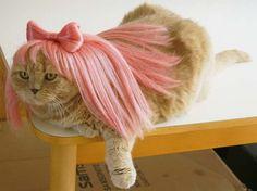 O pretty. Cats in wigs. LOL Looks like Miss Piggy