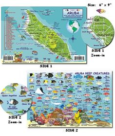 Check out all the fish that I could see if I was snorkeling in Aruba. Aruba Reef Creatures Guide (Mini-map and Fish Card) #aioutlet