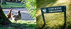 Chickens Crossing - the garden at Langrish House