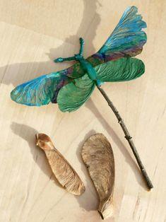 Sudenkorento vaahtera vaahteran nenistä nenä