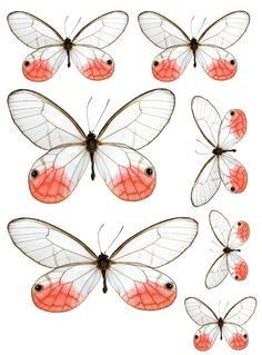 Butterfly printables (use to make wind-up butterflies) 2