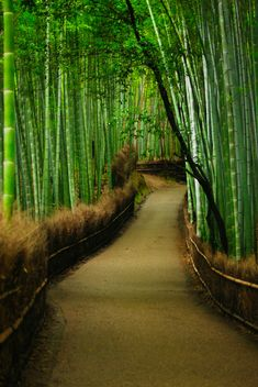 Bamboo forest in Arashiyama district, Kyoto, Japan.A walk through the serene green Bamboo forests in Arashiyama district in Kyoto Japan. Places Around The World, Oh The Places You'll Go, Places To Travel, Places To Visit, Kanazawa, Pathways, Japan Travel, Wonders Of The World, The Good Place