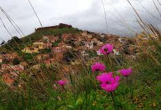 Εμπνεύσεις-Δημιουργίες-Μεταμορφώσεις: #Βολισσσος Chios, Flowers, Plants, Plant, Royal Icing Flowers, Flower, Florals, Floral, Planets