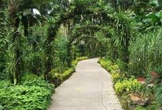 jardin tropical - Google Search