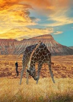 Africa includes a safari for every single traveller - what will probably your travel circumstance be? African safari expeditions and gives range between pail-listing escapades to incredibly-wonderful African Giraffe, African Animals, African Safari, Indian Elephant, Beautiful Creatures, Animals Beautiful, Out Of Africa, East Africa, South Africa Safari