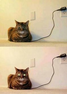 A fully charged cat can only mean one thing! Be sure and hide the toilet paper!