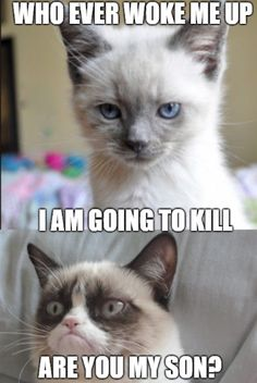 cat son - Grumpy Cat - Ideas of Grumpy Cat - The post cat son appeared first on Cat Gig. Grumpy Cat Quotes, Funny Grumpy Cat Memes, Funny Animal Jokes, Animal Humour, Cat Jokes, Funny Disney Memes, Funny Animal Videos, Cute Funny Animals, Funny Jokes