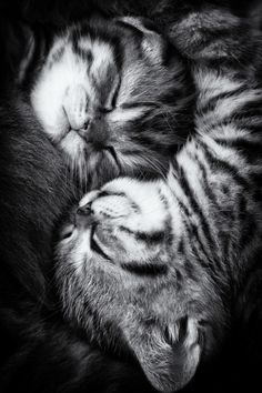 Reminds me of mine, and my cousin's kitties, they love each other so much!
