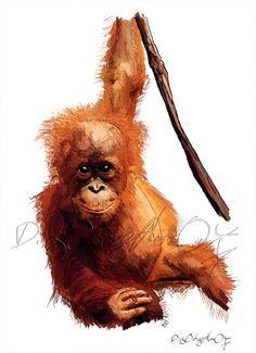 Orangután (pongo pigmaeus)