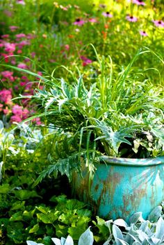 Growing Medicinal Herbs in Containers