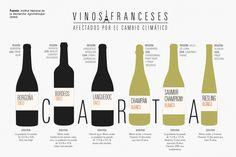 Sara Acosta|@saraacostalanga| París ¿A qué sabrá un vino de Burdeos en 2050? ¿Y el champán? Francia observa intranquila cómo sus célebres caldos cambian