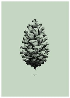 The World's Largest Pine Cone by Form Us With Love as part of their Nature 1:1 for Paper Collective Series