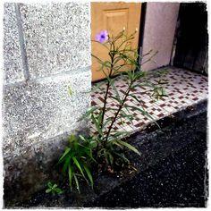welcom flower