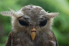 Hungover Owls -- this site is adorable for no particular reason other than it has pictures of really cute owls.