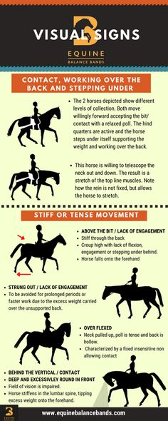 Horse Training Tips, Horse Tips, Horseback Riding Lessons, Horse Exercises, Horse Facts, Horse Costumes, Horse Care, Horse Riding, Animals And Pets
