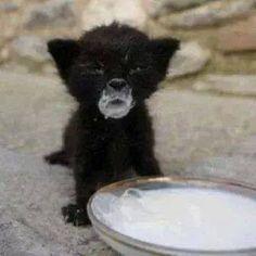 #cat #kitty #cute #sweet #beautiful #animal #color