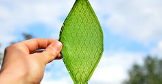 Artificial leaf can make oxygen in space with water and light | THE UT.LAB | Loves Tech Innovations *