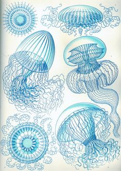 Blue Jellyfish-Soft delicate colors-home decor-Ocean-Nature-Underwater