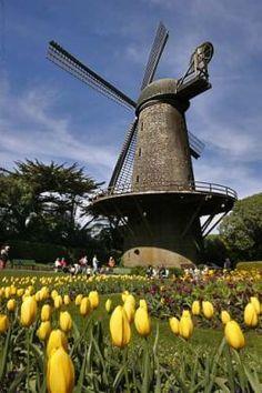 windmill - golden gate park