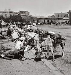 Donkey Boys: Cairo, Egypt 1900-1920