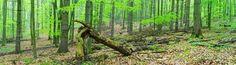 Fototapete schön grün (Nr. 5587)  www.berlintapete.de
