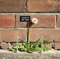 A wonderful series of street art interventions by the Australian artist . - A wonderful series of street art interventions by the Australian artist Michael Pederson. Art Intervention, Dandelion Art, Street Art Graffiti, 3d Street Art, Guerrilla, Australian Artists, Street Signs, Street Artists, Graffiti Artists