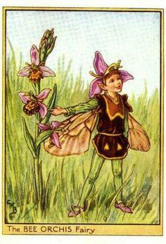 Wayside Fairy, Cicely Mary Barker