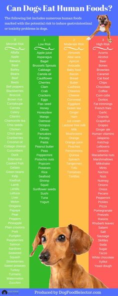 Mango What Human Food is Good For Your Dog Infographic Food Dog, Dog Food Recipes, Good Dog Food, Vegan Dog Food, Vegetarian Dog Food Recipe, Dog Is Good, Dog Treat Recipes, Dog Care Tips, Pet Care