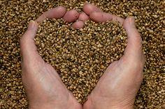 Hearty Hemp Seeds!