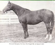Two Lea (USA) 1946 (Bull Lea-Two Bob), dam of Tim Tam (USA) 1955 (Tom Fool-Two Lea), winner of the 1958 Kentucky Derby. Calumet Farm, American Pharoah, Tim Tam, Horse Names, Sport Of Kings, Thoroughbred Horse, Racehorse, Show Horses, Four Legged