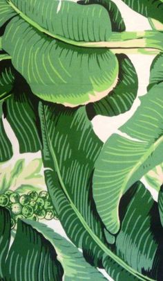 Brazillznce by Carleton Varney Fabric Wallpaper, Cool Wallpaper, Tropical Decor, Tropical Prints, Grand Hotel, Go Green, Fabric Painting, Beach Themes, Designer Wallpaper