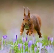 The Beauty of Wildlife — Squirrel by Robert Adamec Flying Squirrel, Red Squirrel, Animals And Pets, Funny Animals, Cute Animals, Beautiful Creatures, Animals Beautiful, Wild Animals Photography, Foto Fun