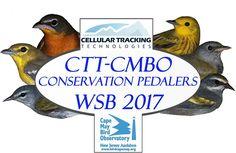 May 2017 WSB