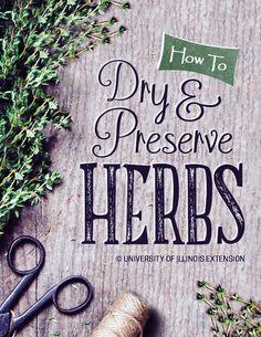 How To Dry & Preserve Herbs #garden #cooking #DIY