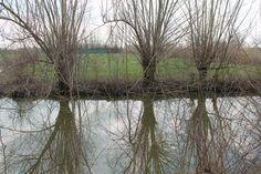 Reflections in the pond / Riflessi nello stagno