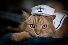 Cute Cat Sailor Hat
