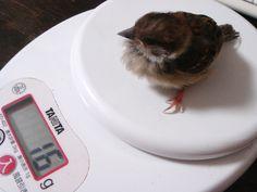 また体重を測る。