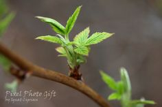 Digital print digital picture baby leaves green by pixelphotogift