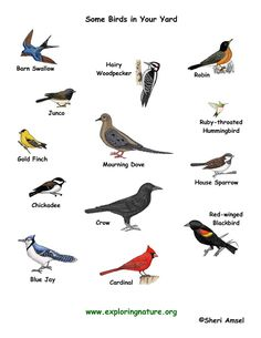 you can see these birds in your garden or yard Birds Pictures With Names, Names Of Birds, Bird Pictures, Birds For Kids, Small Birds, Pet Birds, Different Birds, Kinds Of Birds, Animals Name List