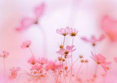 pink memory / 500px