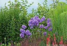 View album on Yandex. Views Album, Paradise, Plants, Blue, Beautiful, Gardening, Planting Flowers, Lawn And Garden, Plant