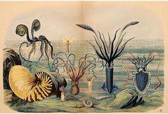 Antique Squid & Octopi Print