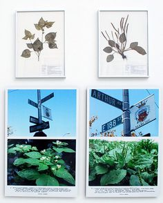 jef geys, 'quadra medicinale' begins with a basic research project searched for twelve wild plants that grow in the streets, in order to explore the basic components of their immediate surroundings. the result of this research is an inventory of ordinary plants, so called 'weeds', which are very often edible or medicinal plants with special properties.