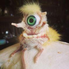 30 Creepy, WTF Taxidermied Animals